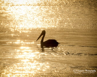 Pelican on the Lake - original photograph, digital download