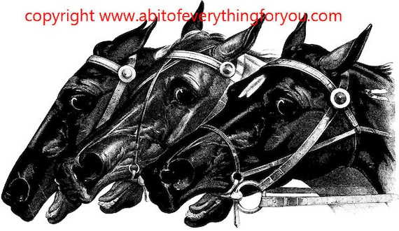 3 horse heads horses printable animal art clipart png download digital vintage image graphics farm ranch black and white artwork