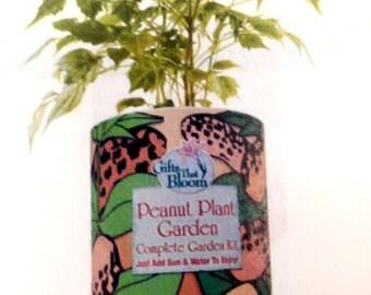 Peanut Plant Garden Grocan