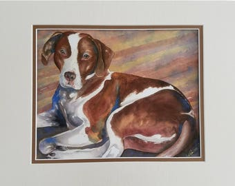 Clearance Item - Pointer Pit Bull Mix Matted 8 x 10 Giclee Print