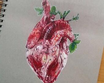 HEARTBERRY  Postcart PRINT