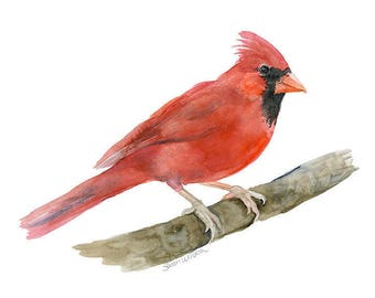 Cardinal Watercolor Painting 14x11 Giclee Print Woodland Animal Fine Art Bird Watcher - Landscape