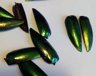 2 beetle wings / shell / iridescent green and bronze Elytron