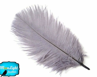 "Ostrich Feathers, 10 Pieces - 8-10"" GREY Ostrich Dyed Drabs Feathers : 1339"