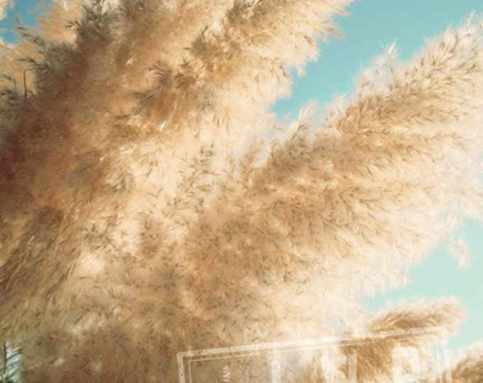 IN STOCK Tangible Sunlight, Grasses in the Sunshine, Nature Detail - 8x12 Fine Art Photograph Teal Aqua Wheat