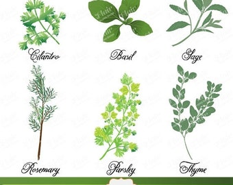 80% OFF Fragrant CULINARY HERBS Digital Clipart, Scrapbooking, Cooking, Gardening Clipart, Plants, Menus, Labels, Digital Collage