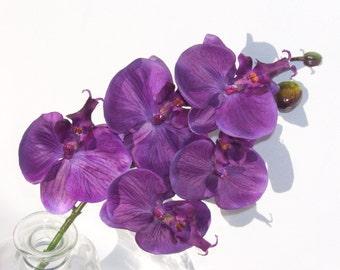 6 Stems Plum Purple 5 Bloom Phalaenopsis Orchids