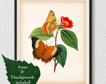 Vintage butterfly print, Butterfly art, Insect print, Wall art vintage, Instant download print, Printable art, Antique print, 8x10 11x14 A3
