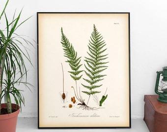 Fern print, Fern illustration, Vintage fern print, Digital botanical print, Antique botanical print, Wall art printable, Botanical decor