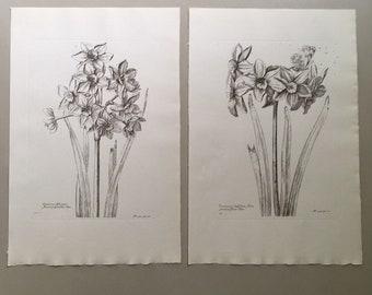 "Vintage botanical flower prints 12""x8"""