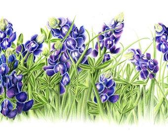 Bluebonnets - Original Color Pencil Drawing by Artist Valorie Sams