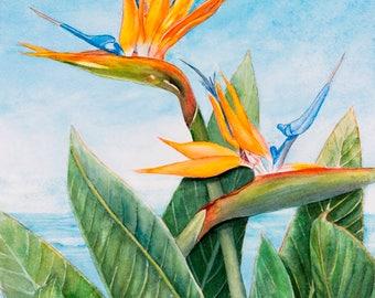 Bird of Paradise Painting Art Print