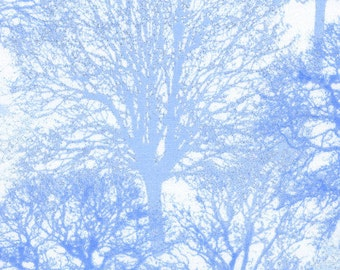 Timeless  Treasures - All Over Trees - Ice-CM1313-Snow -Blue - Trees -  Holiday - Novelty - Winter - One More Yard