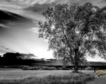 Glimpse Into Heavan - - Vernon County Sunset, Single Tree in the field looking into the Heavens
