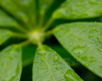 Large Print Green, Macro Photography, Nature Photography, Rain Drop Macro, Green Home Decor, Large Wall Art, Big Prints, Tropical Photo