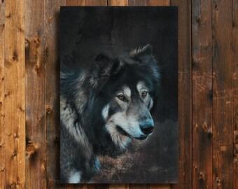 Stare Down - Wolf Art - Wolf Decor - Wolf photography - Animal art - Wolf Dog - Native American style decor