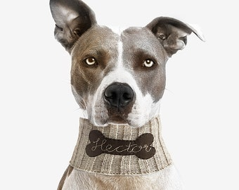 Personalized Collar, Personalized Neck Warmer, Custom Pet Clothing, Dog Neckwear, Collar With Name, Pet Gift, Pet Clothing, Dog Clothing