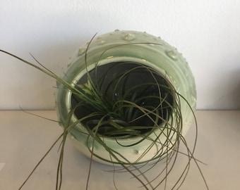Urchin planter #9