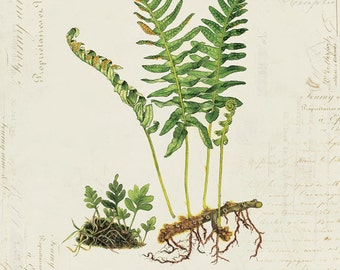 Vintage Fern on French Ephemera Print 8x10 P159