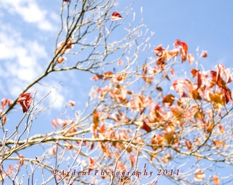 Fall Leaf Photograph with Red Leaves and Blue Sky - Wall Decor - Photographic Wall Art By Sarah McTernen