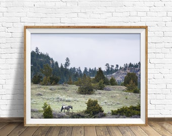 """landscape, woodland, nature, photography, instant download art, printable art, large art, large wall art, print - """"High Country Traveler"""""""