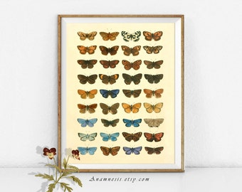 BUTTERFLY COLLECTION Print - digital download - printable antique insect collage for framing & image transfer to totes, pillows etc.