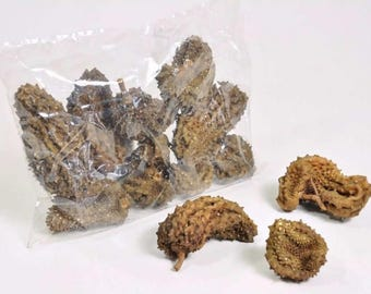 Crocodile fruit 5-15cm -  dried pods and fruit - natural decoration