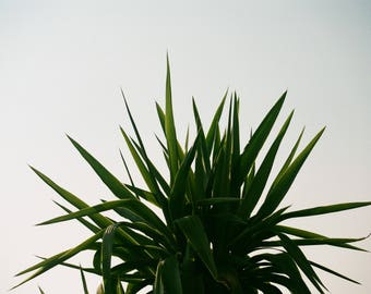PLANT* Film Photography LIMITED EDITION Art Print