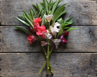 Balsam Impatiens, Garden Balsam, organic seeds, heirloom seeds, cottage garden, flower gardening, flower seeds, seed packet, organic garden
