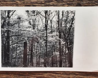 Original Vintage Photograph | The Forest for the Trees