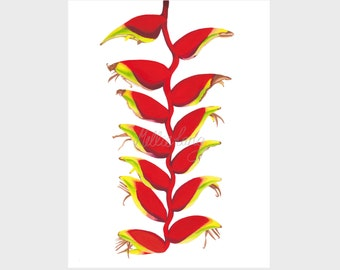 A 'hanging Lobster claw' tropical flower. Limited edition giclee print 8x10""