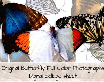 Original Butterfly Full Color Photographs Digital Collage Sheet 0001