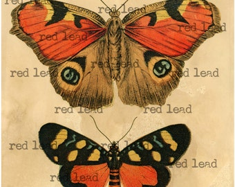 Antique Butterfly Print - Digital Download Vintage Butterfly Print