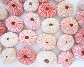 5 Sea Urchins-Beach Wedding Favors-each Decor-Sea Urchin Natural Sea Shell-Beach Wedding Decor-Pink Sea Urchin Bulk-Sea Urchin
