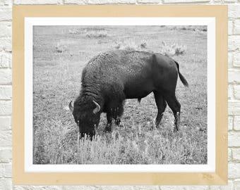 Yellowstone Bison Print Nature Photography Buffalo Print Nature Prints Modern Printable Art Instant Download Printable Decor