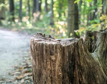 Color Photo of Tree Stump While Walking Through the Park,Picture, Woods, Trees, Greenery, Scenery, holiday