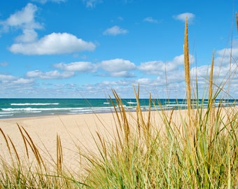 Nature Photography: Beach Grass PRINT