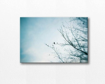 birds photography canvas print 12x18 24x36 fine art photography birds in tree canvas wrap birds wall decor clouds canvas pastel gray blue