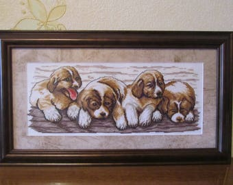 Щенки сенбернара, Saint Bernard Puppies