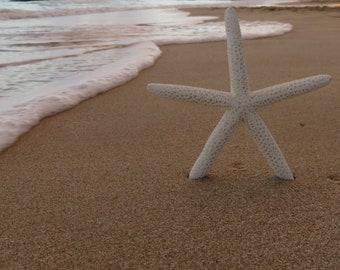 Starfish beach photograph sun sand waves ocean sea warm tide star tropical vacation