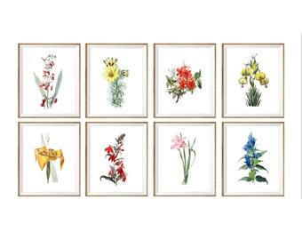 Antique Botanical Art Print SET of 8. botanical art, botanical flower chart, botanical illustrations, bedroom art, cottage, nature prints