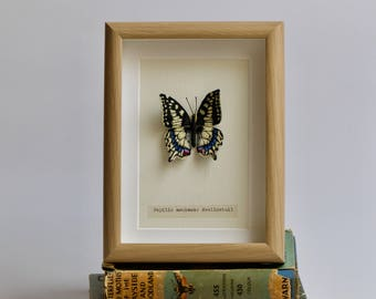 Hand embroidered Swallowtail butterfly.