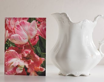 Photo card:  Apricot Parrot Tulip, Wooden Shoe Tulip Farm, Woodburn, OR