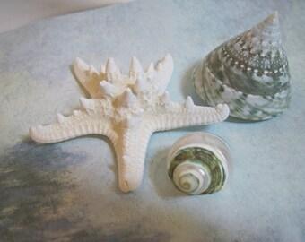 Seashells, Knobby Starfish - Mixed lot - Turbo Shells