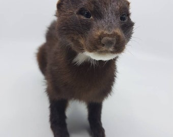 Real taxidermied mink