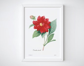 Christmas Red Decor, Botanical Prints Red Flowers Wall Art, Watercolor Dahlia Illustration, Pierre Redoute | DAHLIA DOUBLE