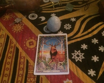 Single Card Message From The Druidic Animals, Same Day Reading