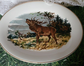 Deer or stag oval platter. A stag on the edge of woodland. Gold rim.