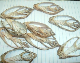 Bat Volute Center Cut (3 seashells)