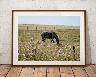 Equestrian Decor, Horse Gifts, Horse Nursery, Horse Photo, Animal Art, Animal Decor, Rustic Girl Nursery Decor, Rustic Artwork, Country Chic
